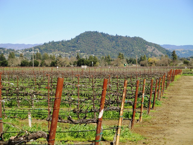 Fitch Mountain in Healdsburg