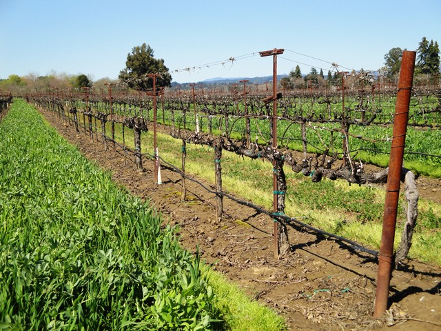 Vines in March